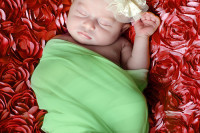 winchester va newborn baby portrait at christmas