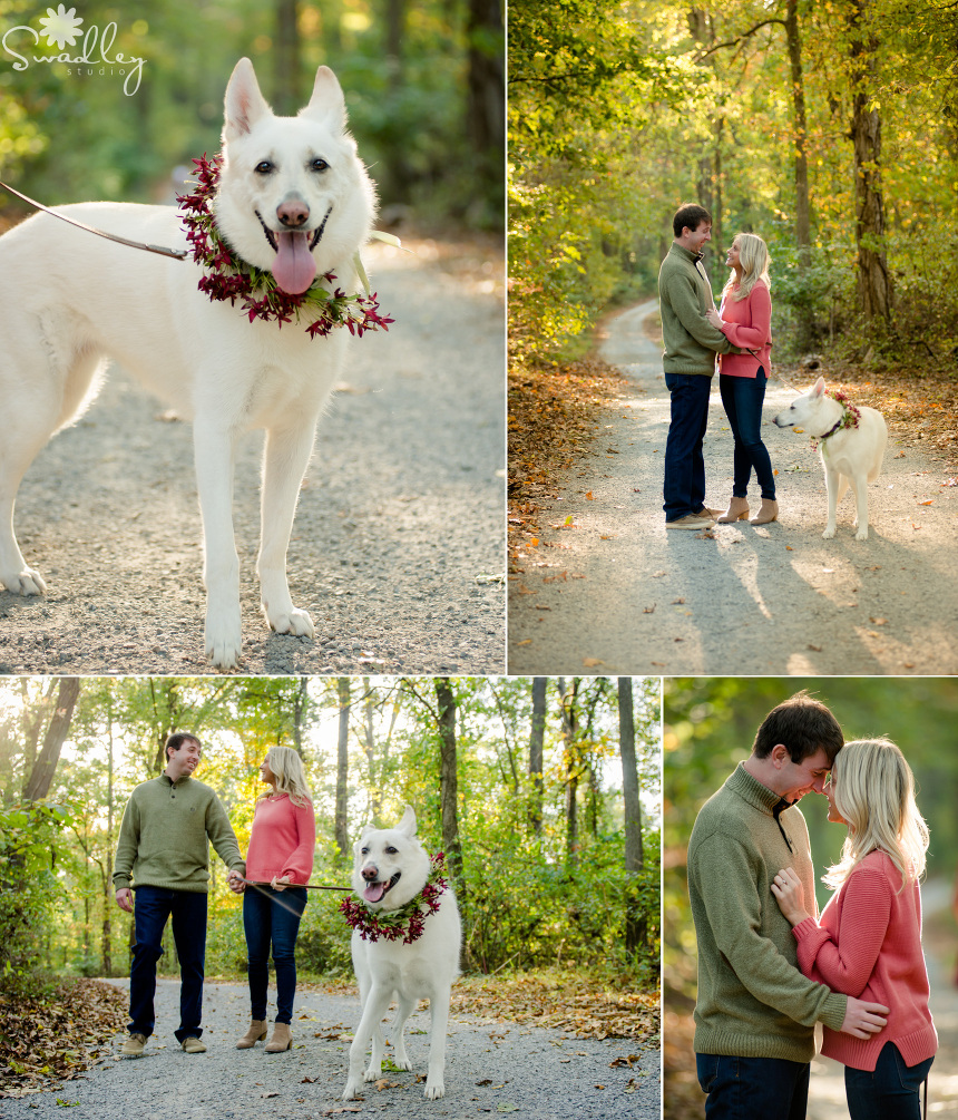 dog pet engagement wedding photographer 2
